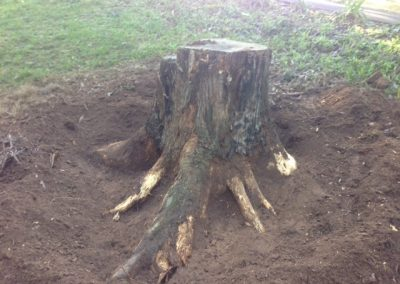 Another big tree stump removed