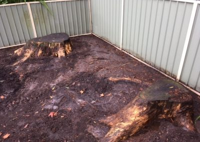 Blackbutt stumps