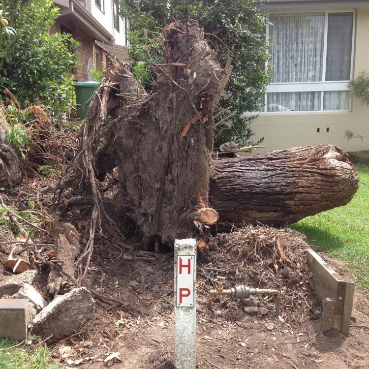 Central Coast Stump Grinding