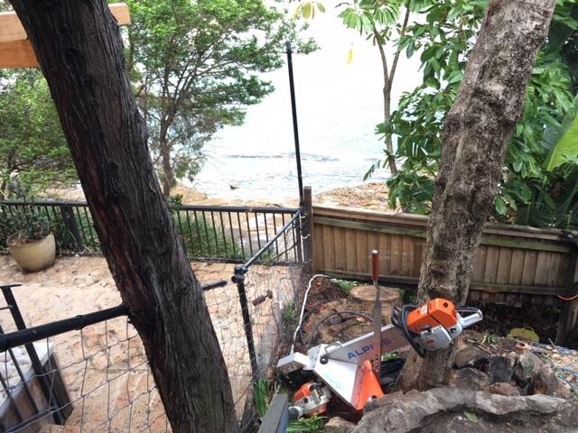 Stump removal – Vaucluse, Sydney