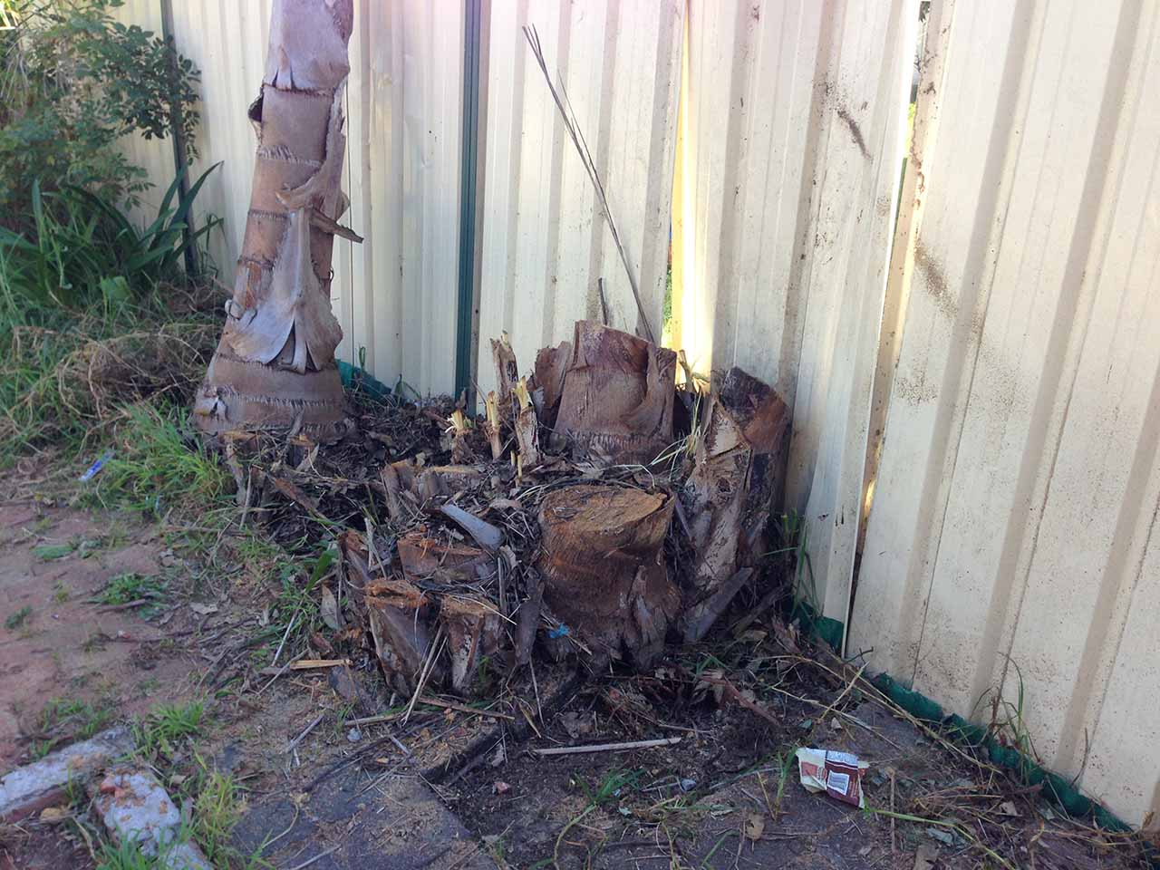 Fence falling down due to stumps