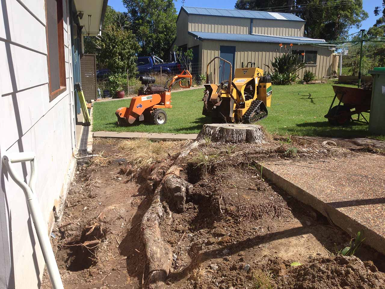 Renovations on hold due to stump