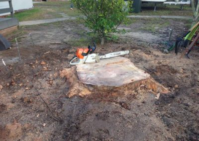 Huge Stump to be removed