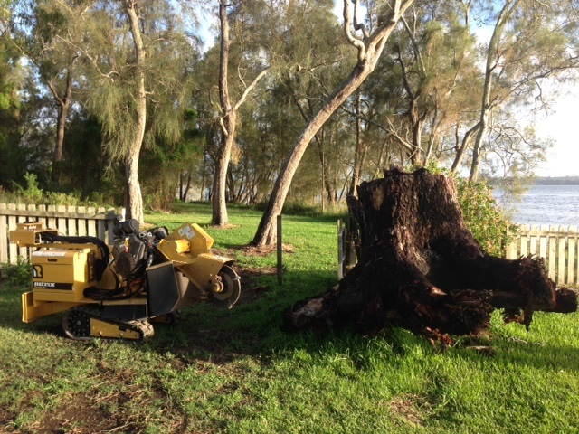 Big Ironbark root ball that couldn't be removed by the excavator Gororkan