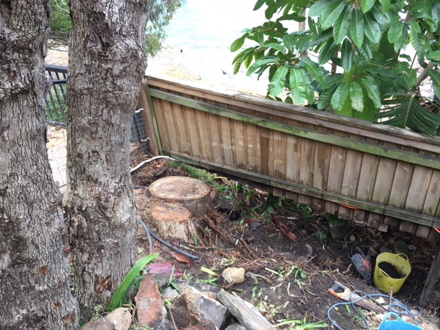 Two medium size stumps to be removed – Vaucluse, Sydney