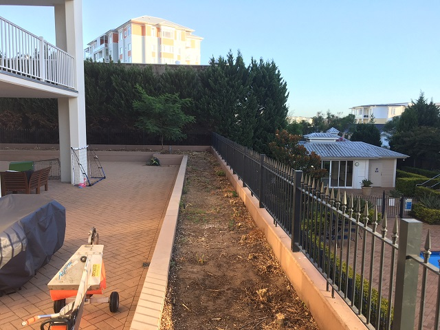 Stump removal 55 Murraya plants in Drummoyne, Sydney