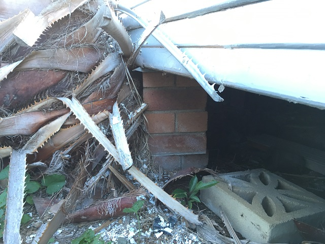 Picture shows Palm tree stump damaging house before stump removed - Cessnock